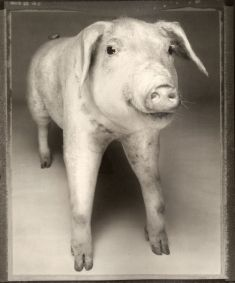 Bettina Rheims- Animal 1982