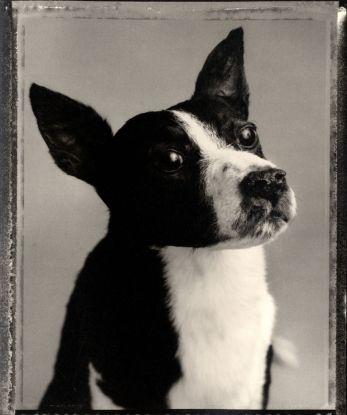 Bettina Rheims- Animal 1982